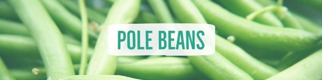 beans-pole-header
