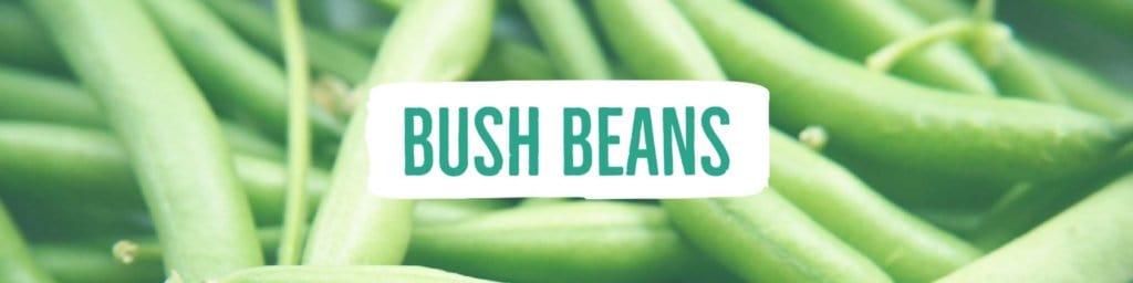 beans-bush-header