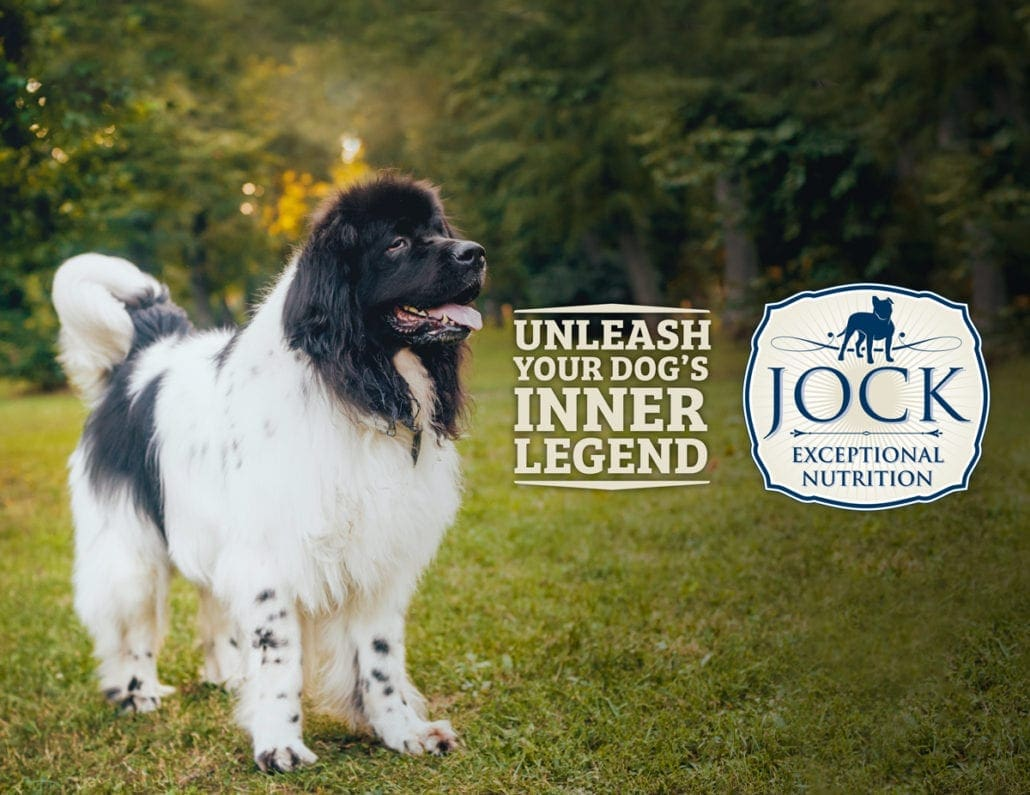 Know your Breed Newfoundland