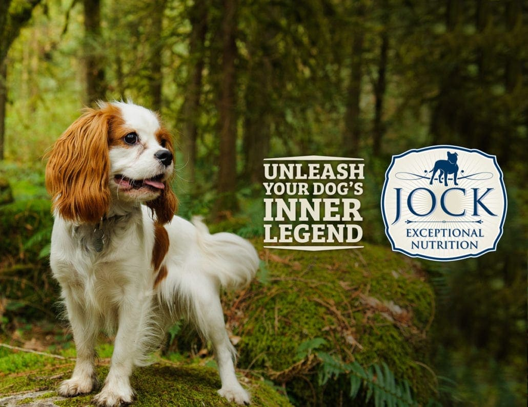 Know Your Breed - Cavalier King Charles Spaniel