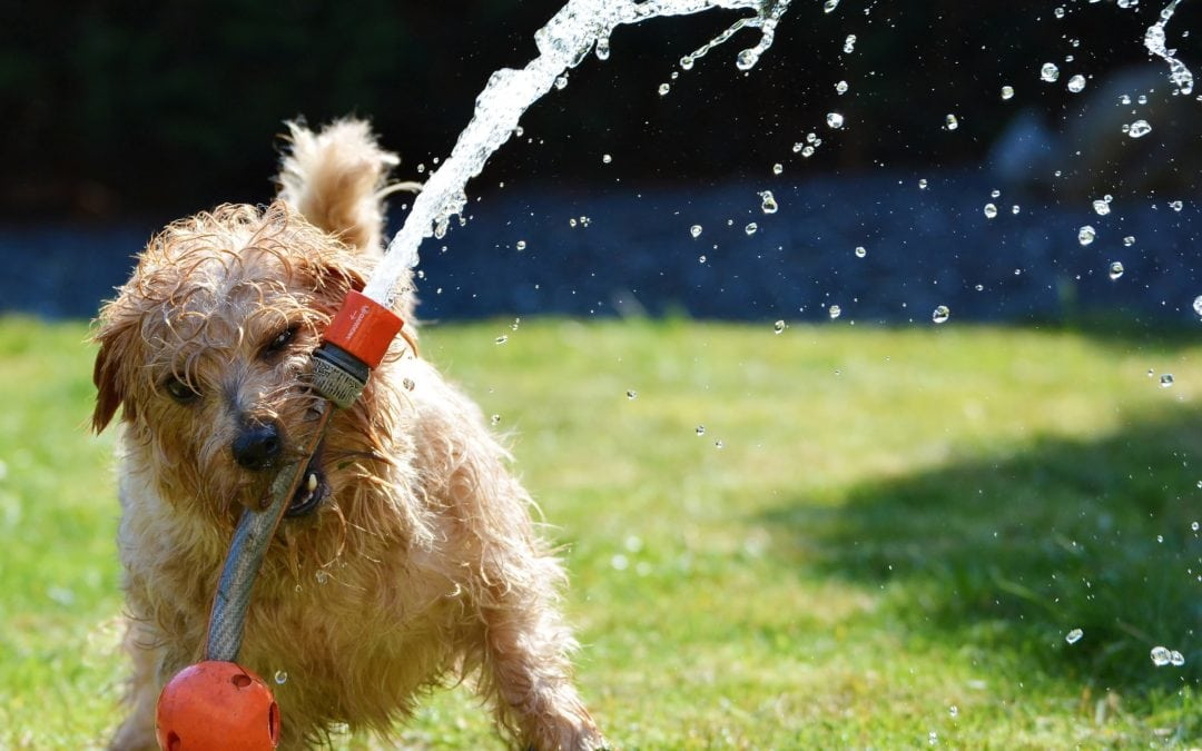 6 Tips for Keeping Your Dog Safe During the Summer in Arizona