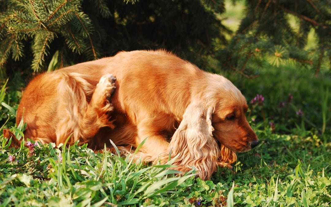 Does Your Dog Have Itchy Skin?
