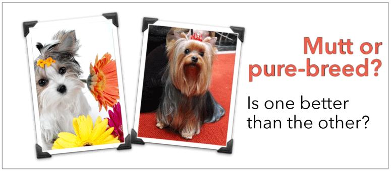 Mutt or purebred dog?