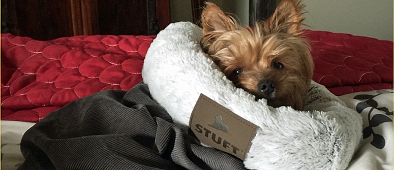 Should your Morkie sleep in your bed?