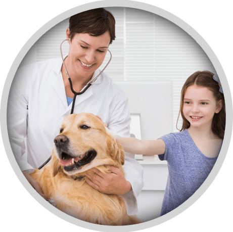 Vet Surgeon | Common Cysts