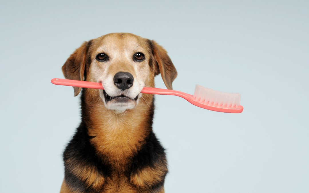 Veterinarian Clinic   Teeth – Window to Health