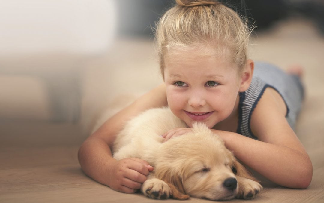 Vets in Gilbert | Puppy Preparation