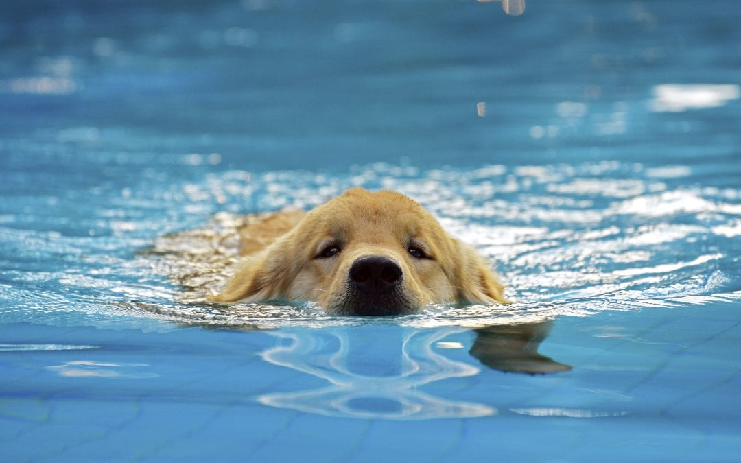 Local Vets | Summer Tips For Dogs