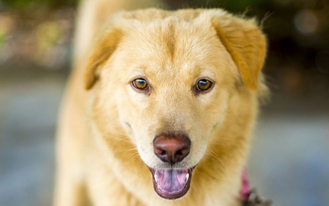 Great Vacation Spots for Dog Owners
