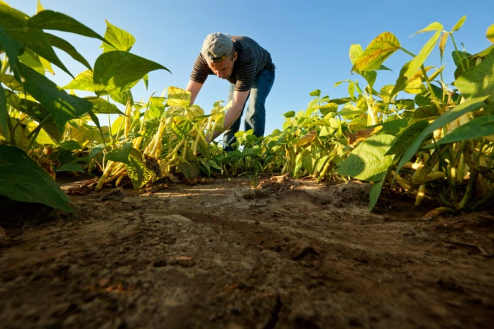 Confederación de Asociaciones de Productores Agropecuarios de Venezuela (Fedeagro)