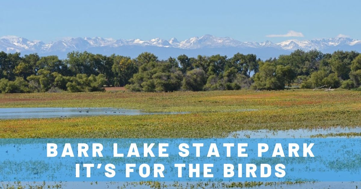 Barr Lake State Park: It's for the Birds