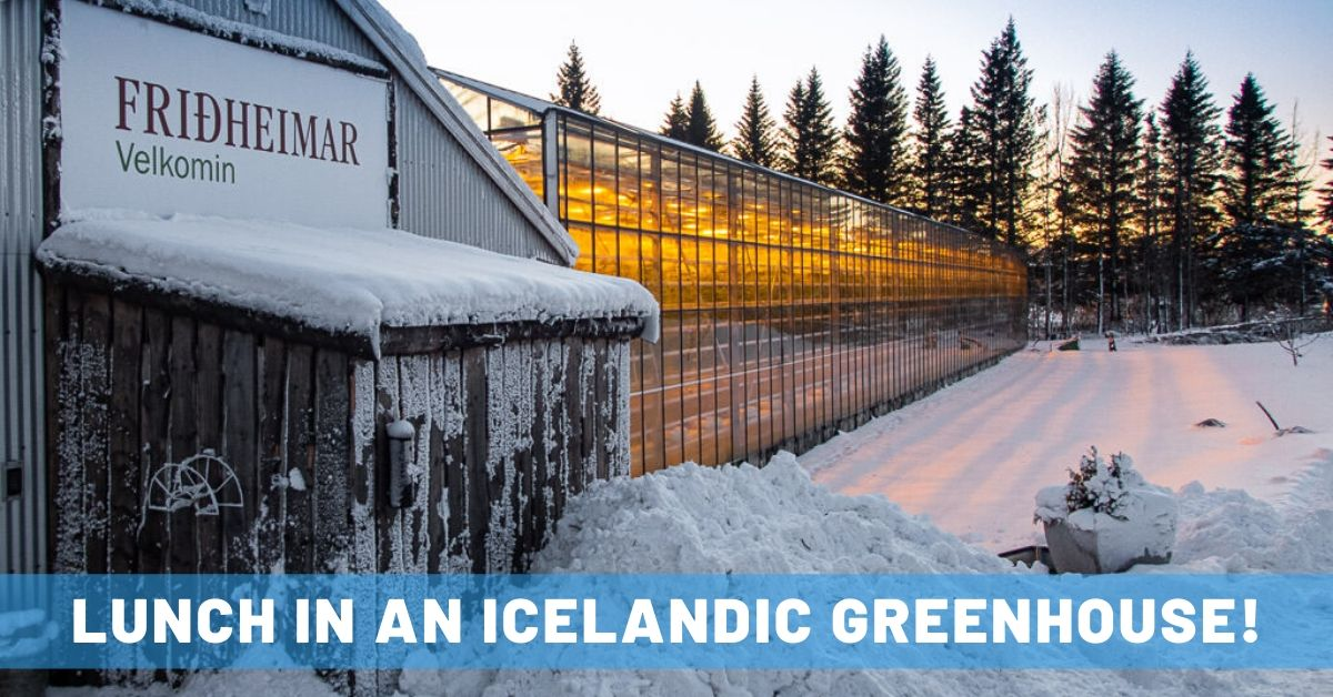 Fridheimar Greenhouse in Iceland's Golden Circle: An Unforgettable Lunch Spot