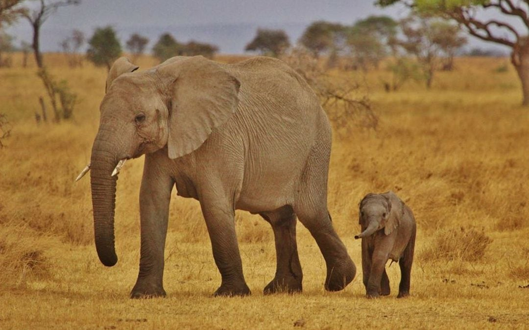 7 beste attracties en activiteiten in Serengeti Nationaal Park