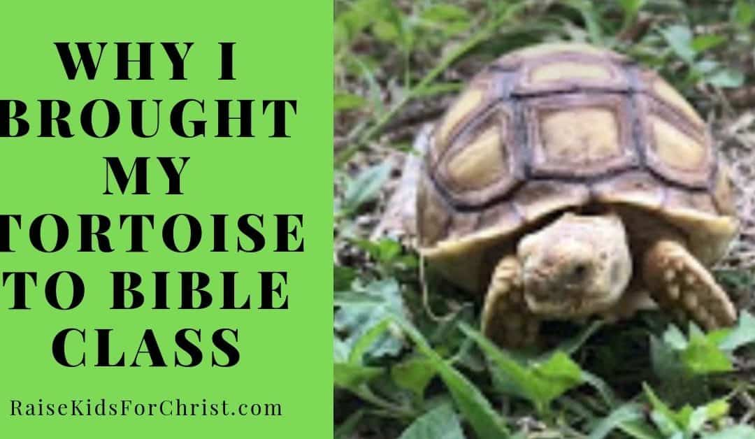 Why I Brought My Tortoise to Bible Class
