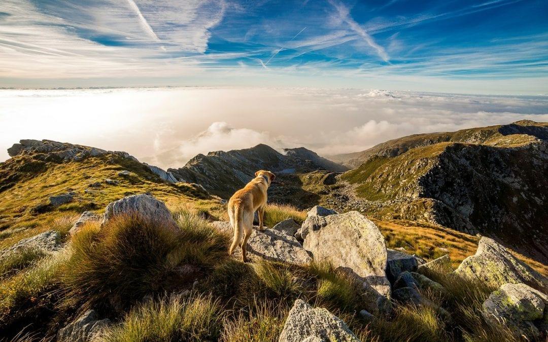4 Metro-Phoenix Dog-Friendly Trail Hikes
