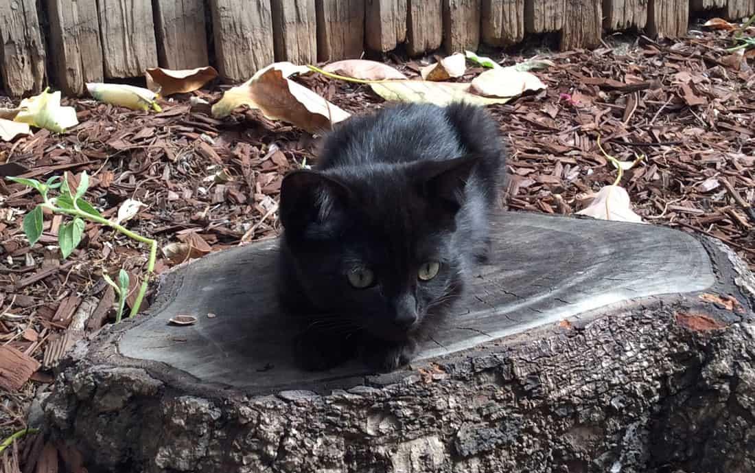 Black kitten sitting on a tree stump