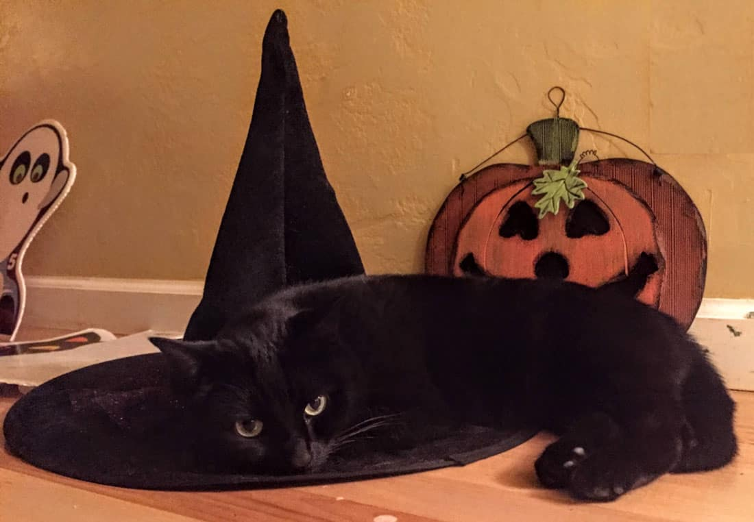 Black cat lying on a witches hat.