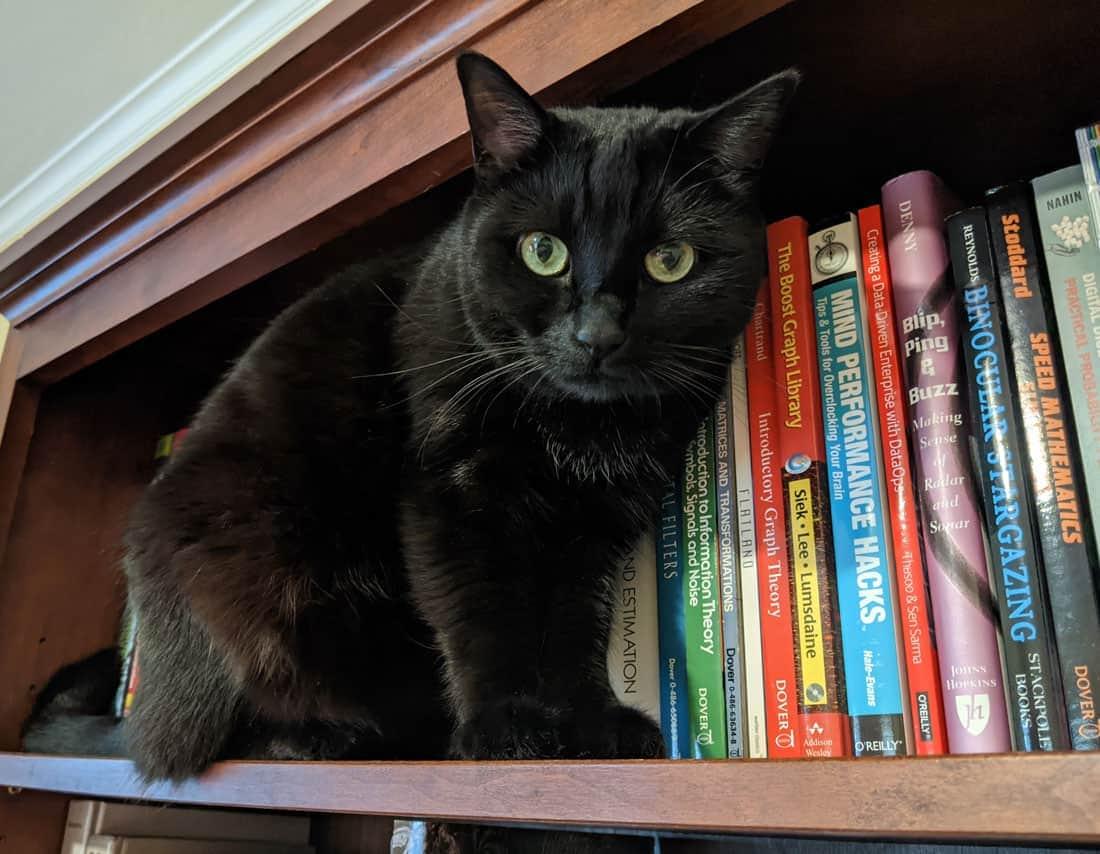 Cat sitting on a bookshelf
