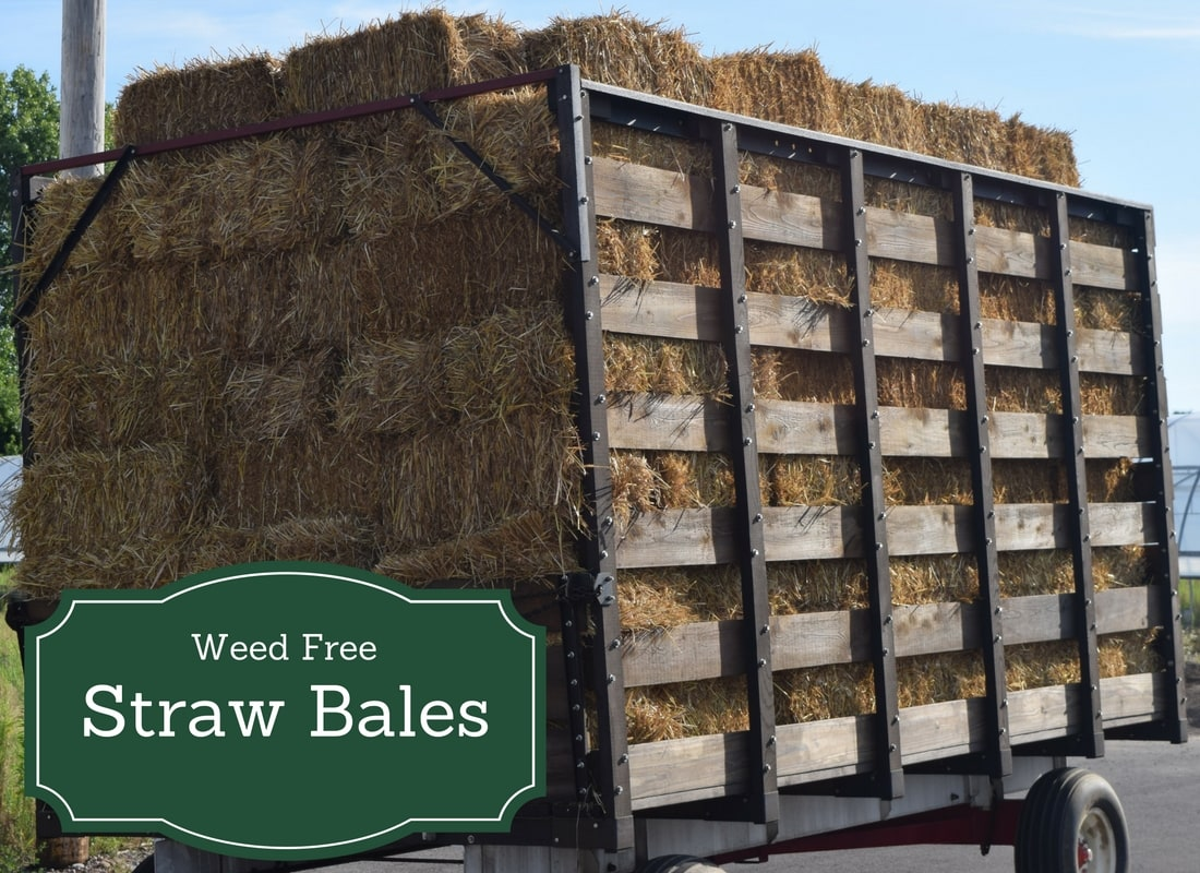 Weed Free Straw Bales available in Syracuse