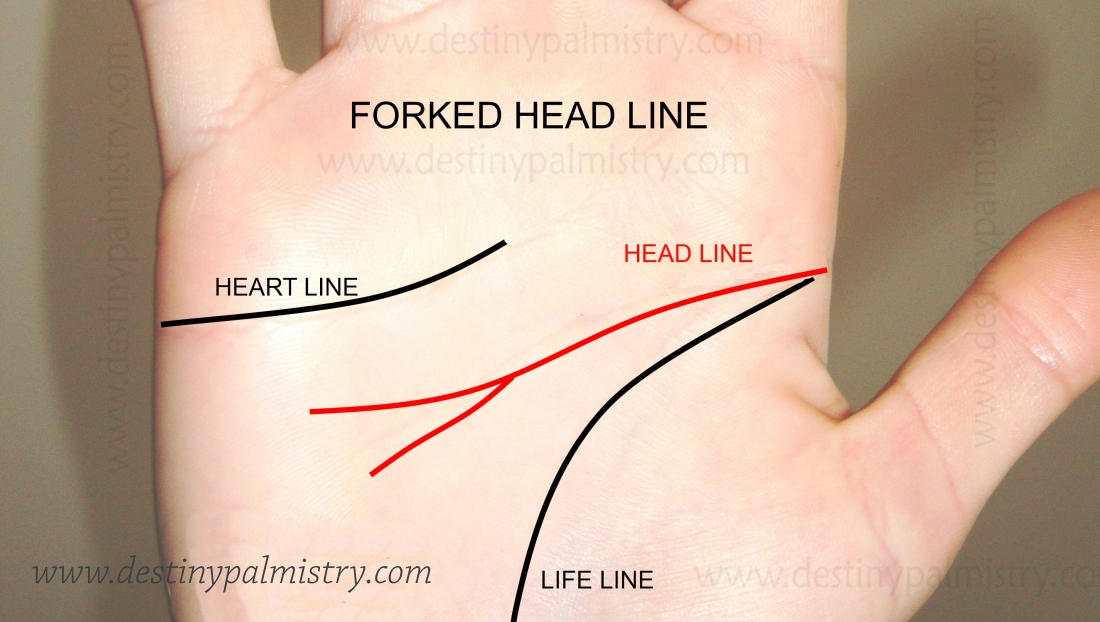 forked head line