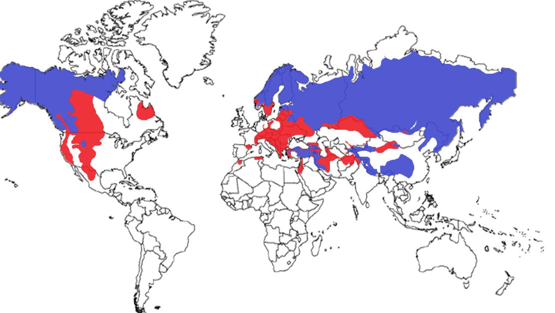 Brown Bear Species Range Map