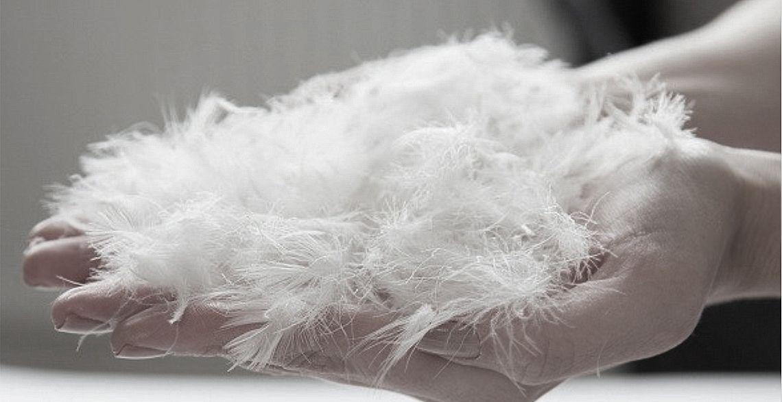 white goose down for pillows