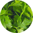 gemüse gewürz petersilie