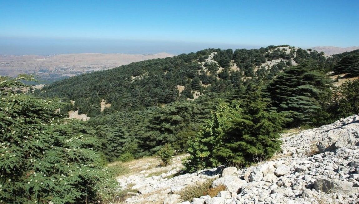 Barouk Reserve Shouf Lebanon Expedition tour