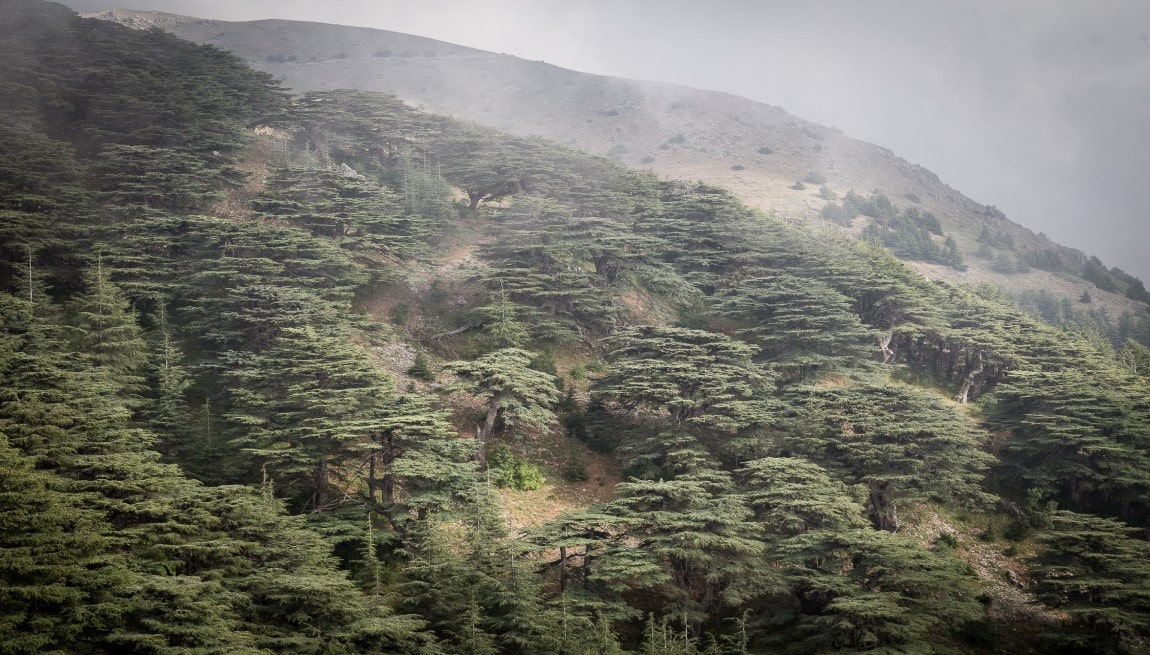 Shouf Bio reserve Lebanon Expedition tour package