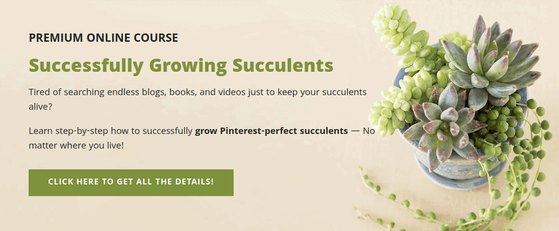 Succulents and Sunshine Online Course Example