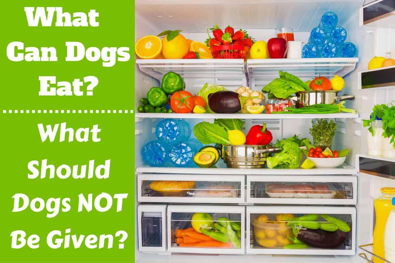 What can dogs eat written beside a fridge full of food