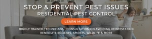 Stop and prevent pest issues