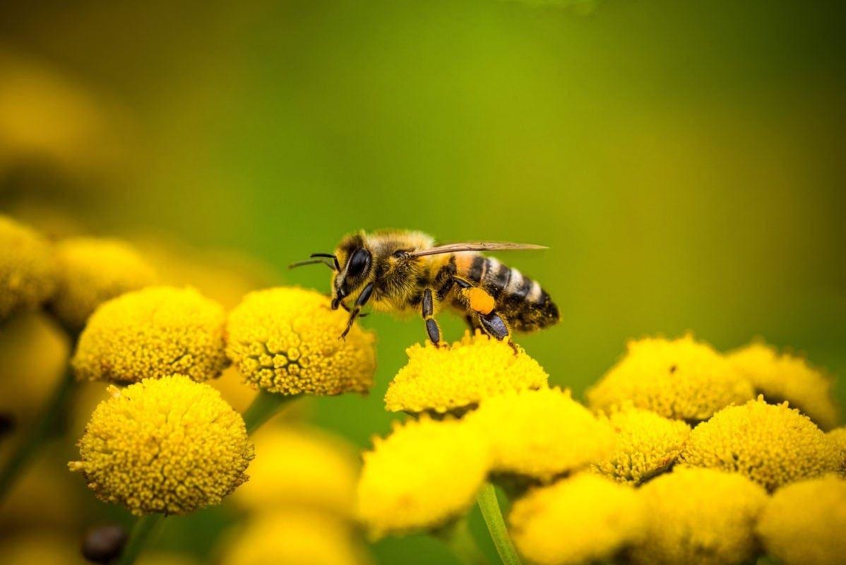 Bienen Pflanzen Saatgut