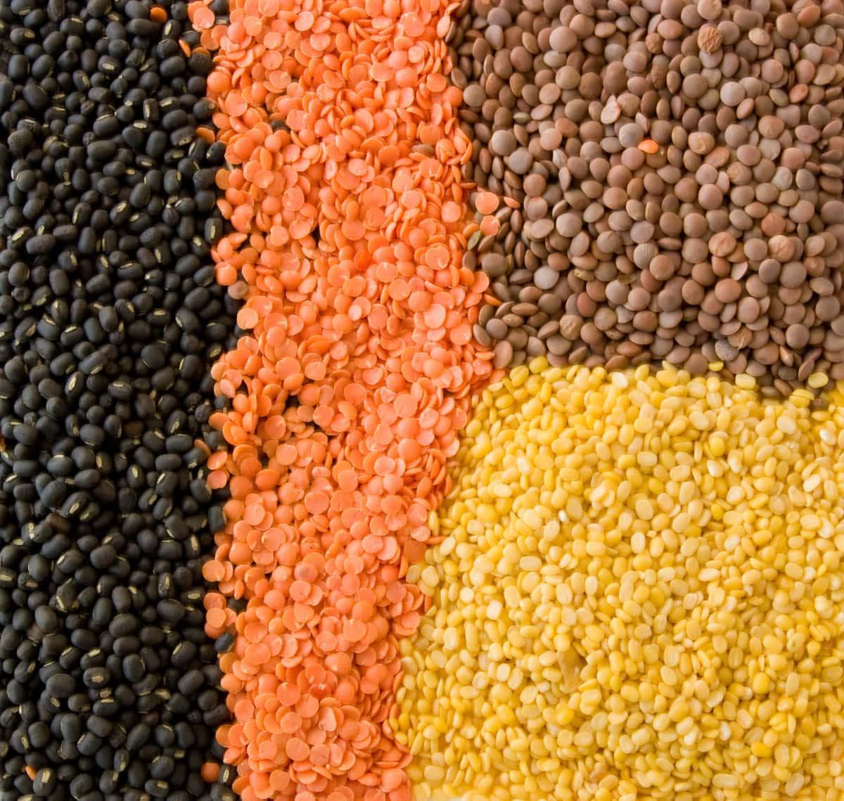 Lentils from black lentils, red lentils, yellow split peas to brown lentils