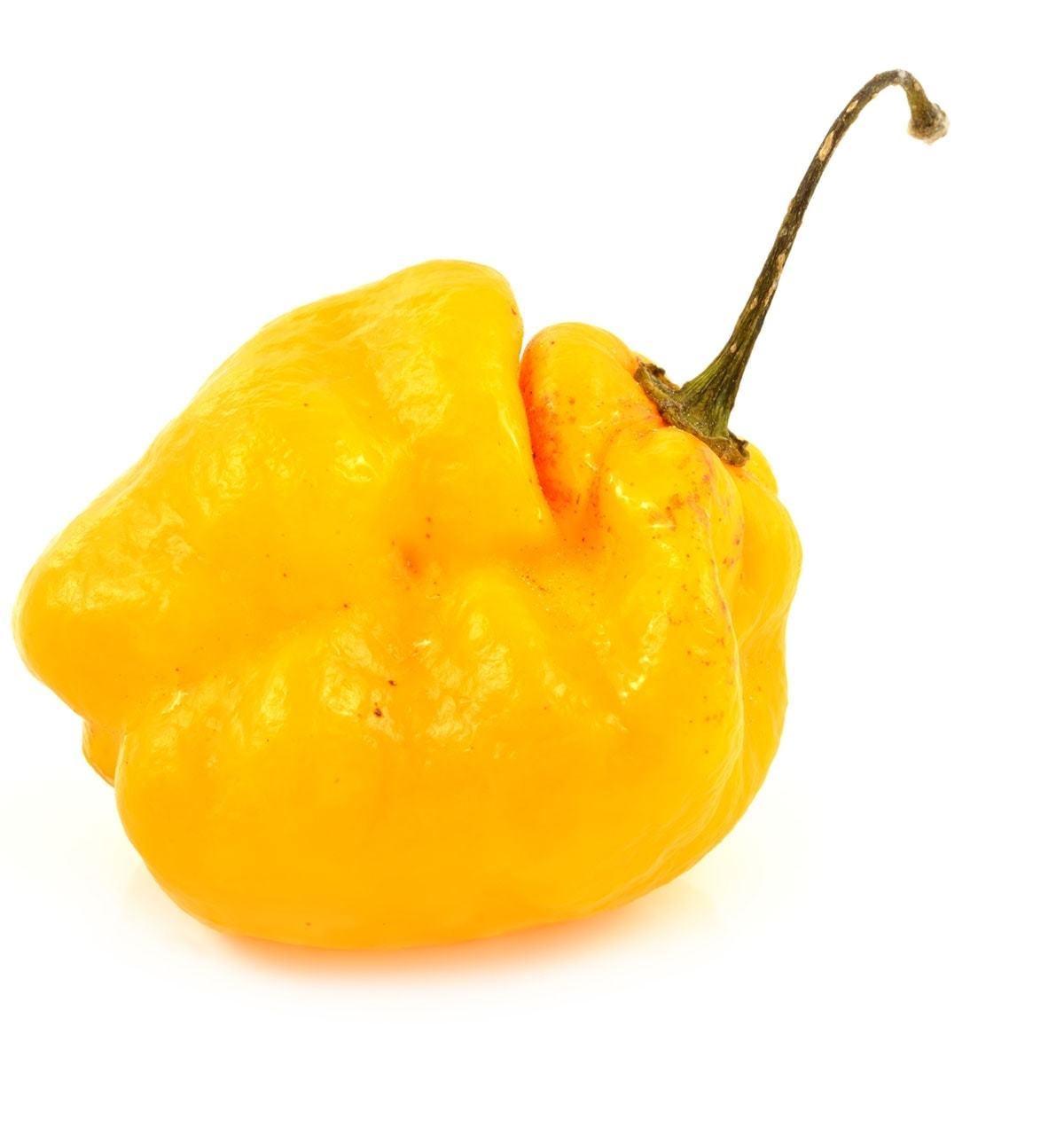 scotch bonnet pepper isolated on a white background