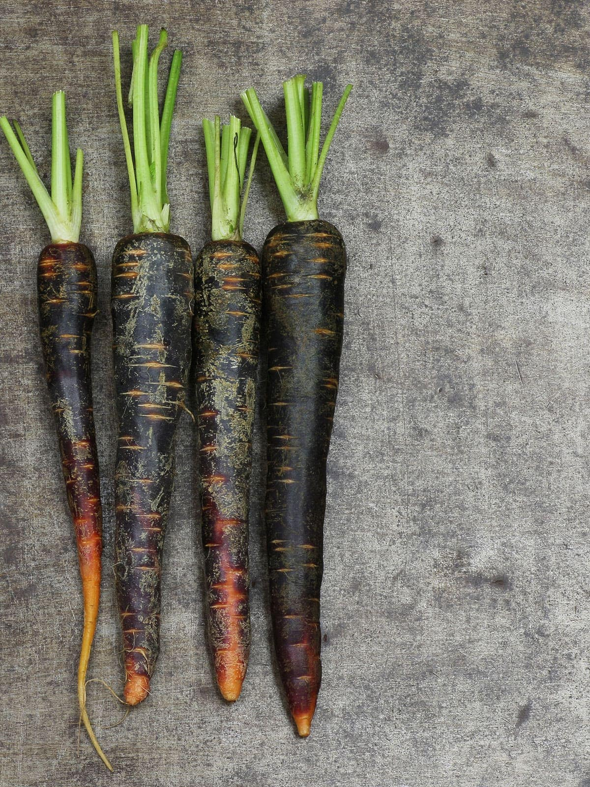 over lay of 4 black carrots on a grey background
