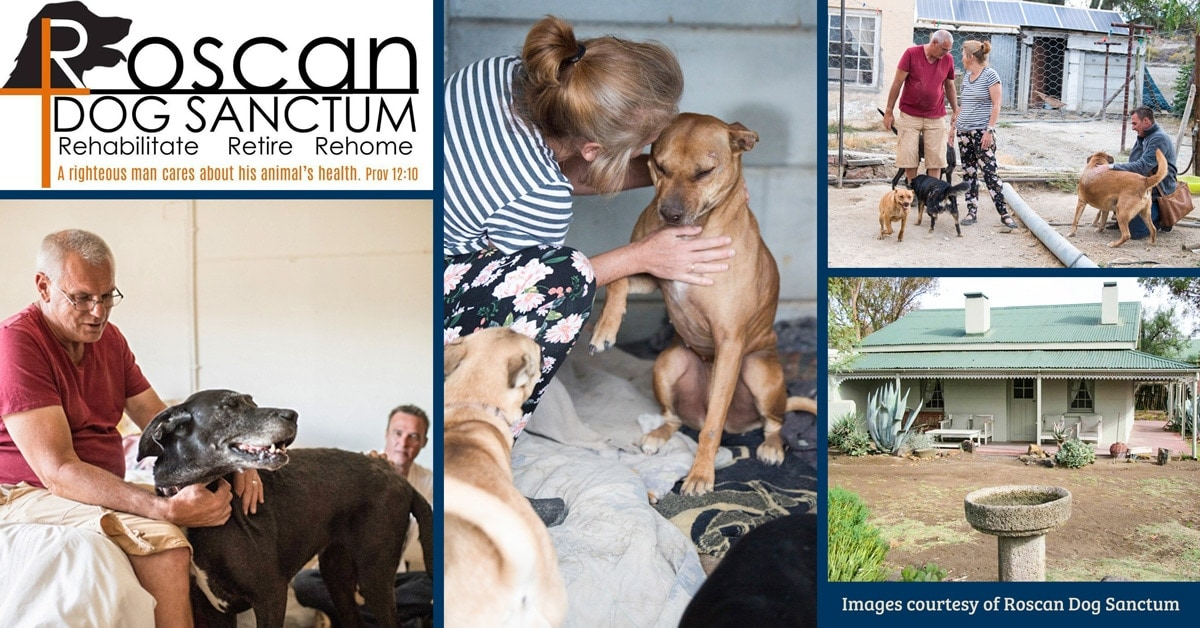 Roscan Dog Sanctum and the graceful act of caring