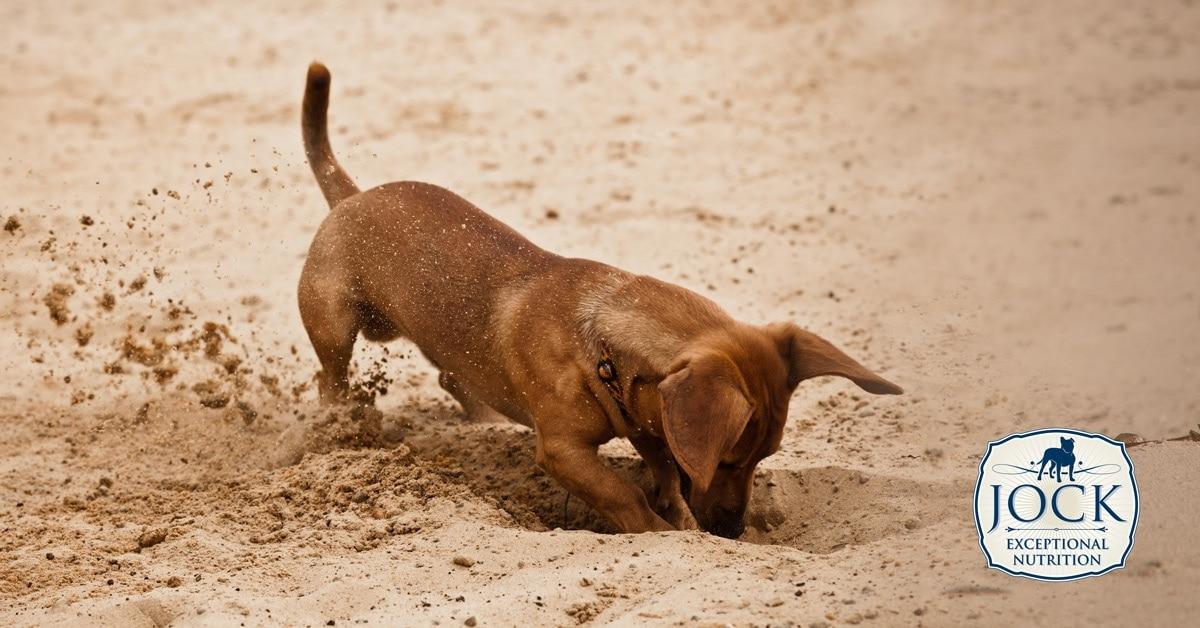 Ask the Expert - Compulsive behaviour in dogs