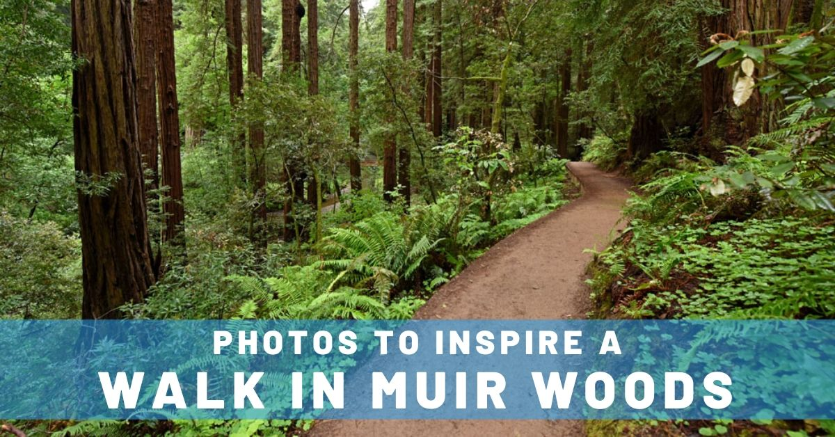 10 Photos to Inspire a Walk in Muir Woods
