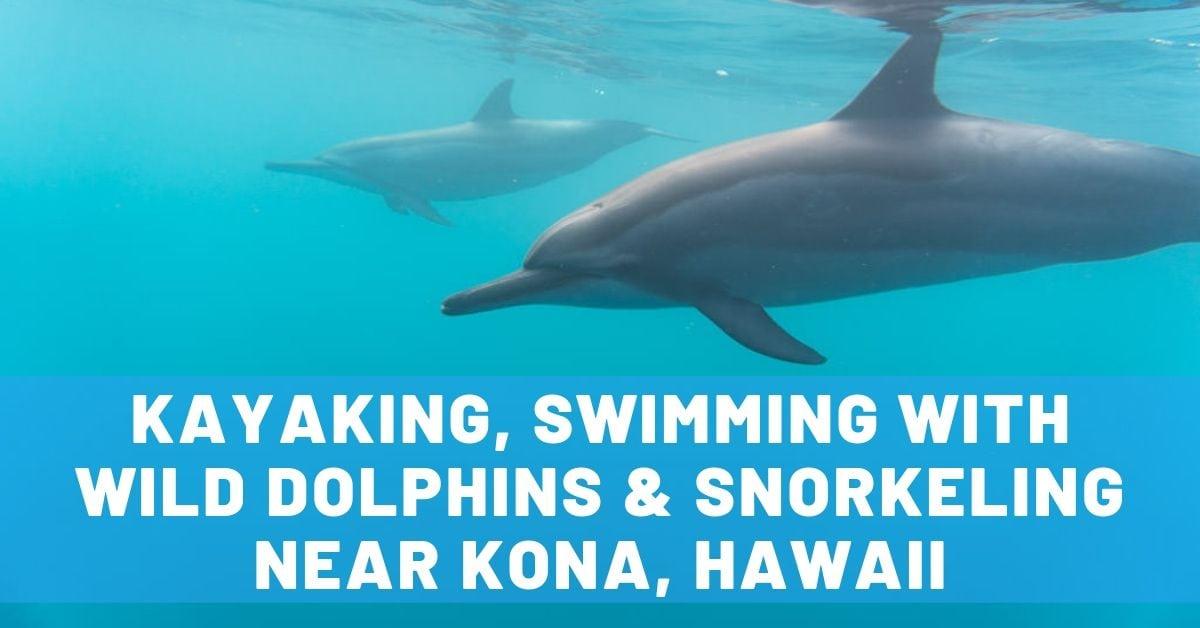 Big Island Kayaking, Swimming with Wild Dolphins & Snorkeling Near Kona