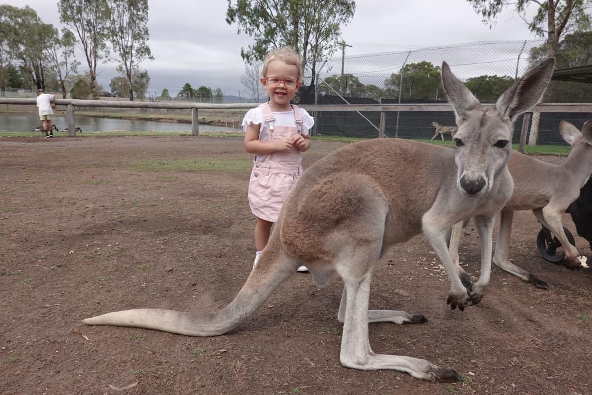 Hunter Valley Zoo kangaroos