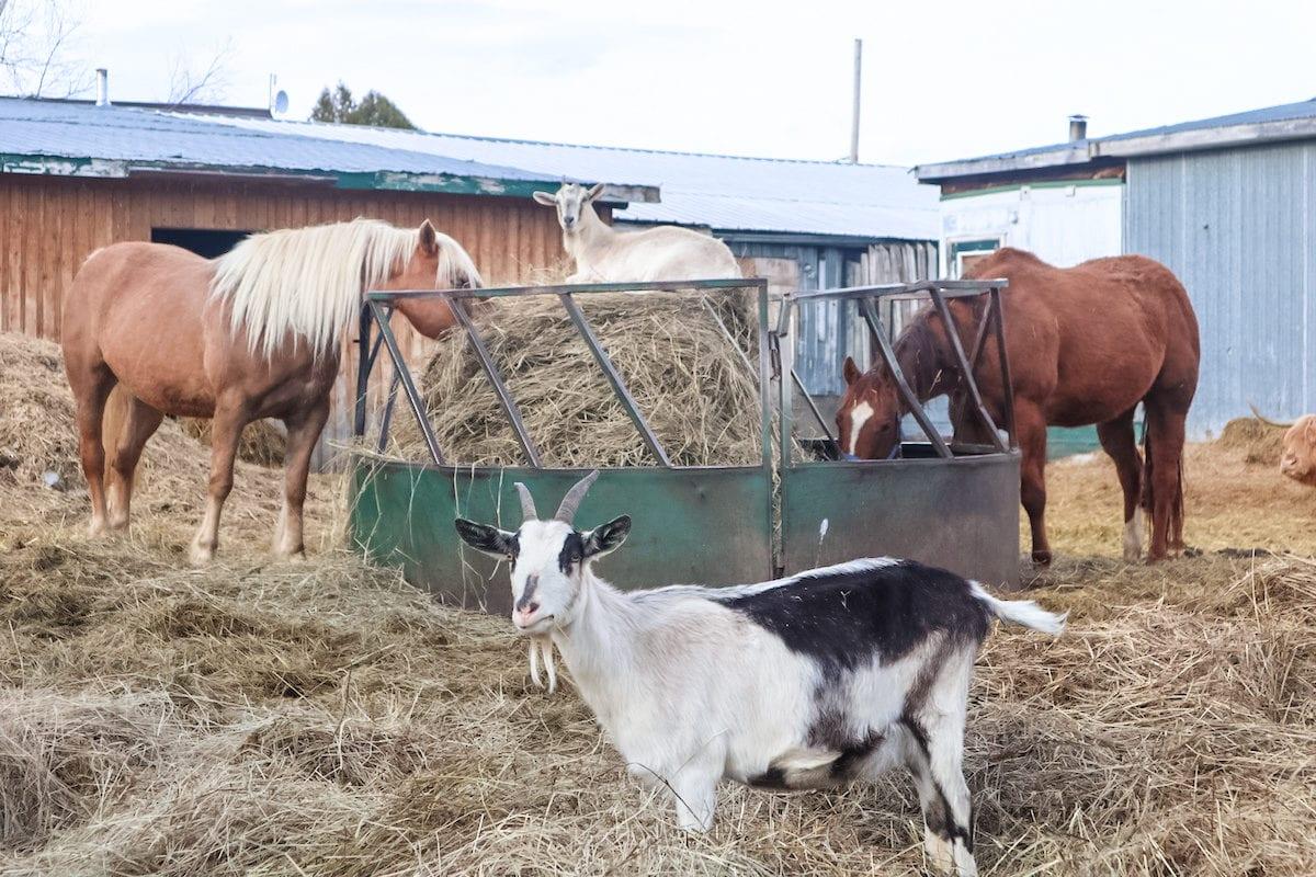 Ferme 5 étoiles farm
