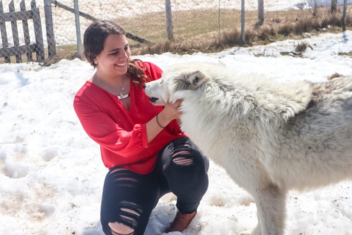 wolf encounter Fun day at the Ferme 5 étoiles Farm