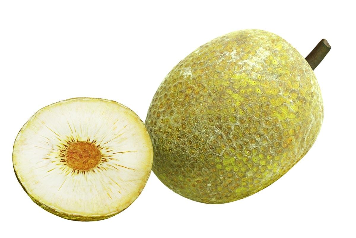 breadfruit on a white background