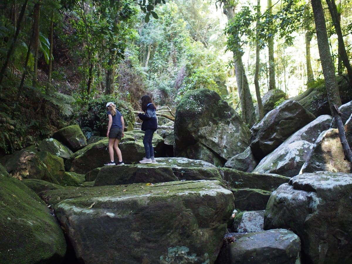 Watagans Gap Creek Forest Walk