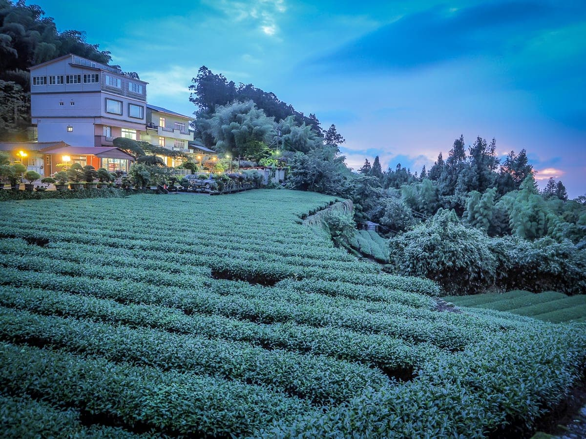 Alishan sunset from a tea farm