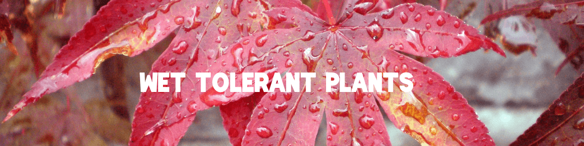 Wet Tolerant Plants