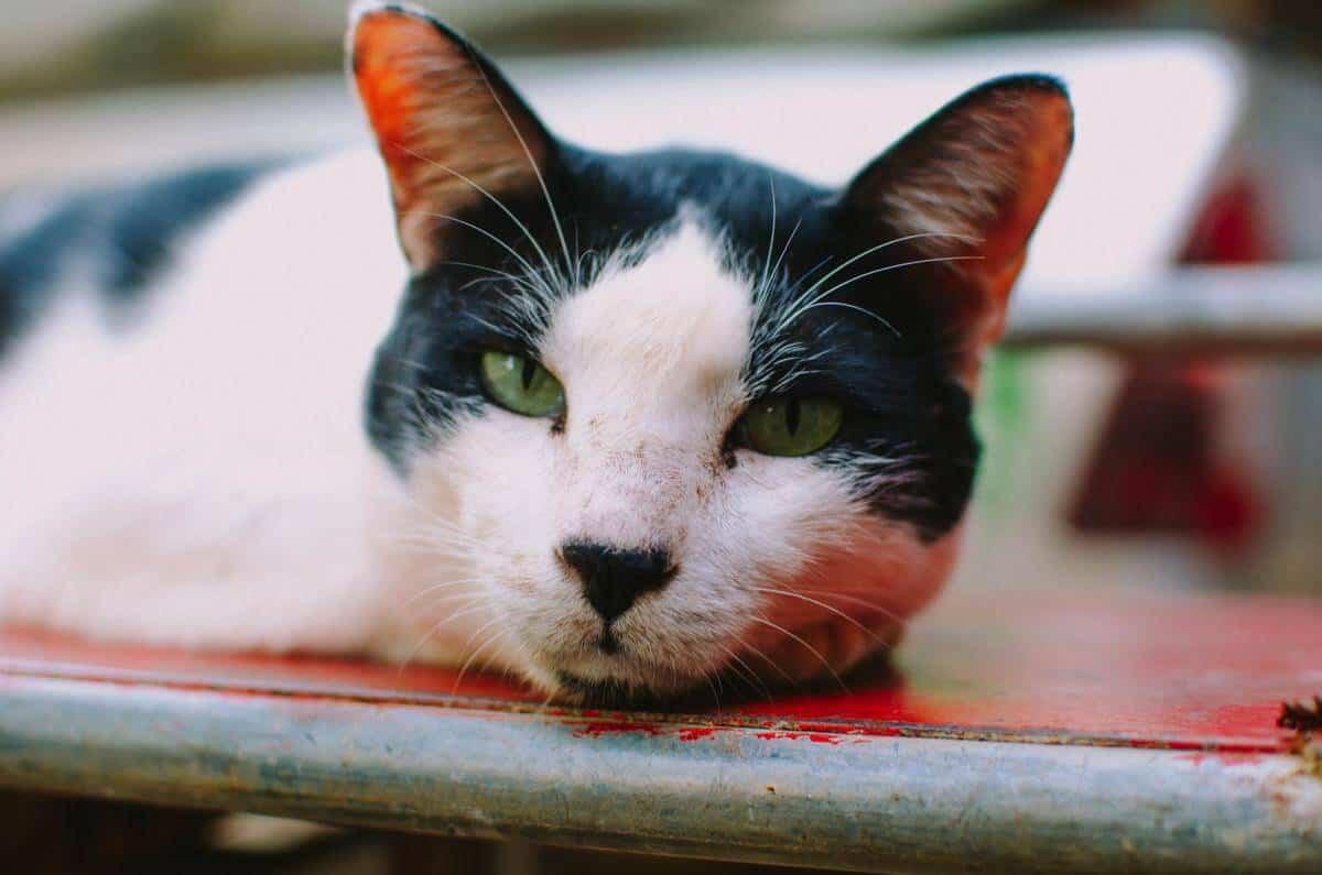 Cats at Lanta Animal Welfare