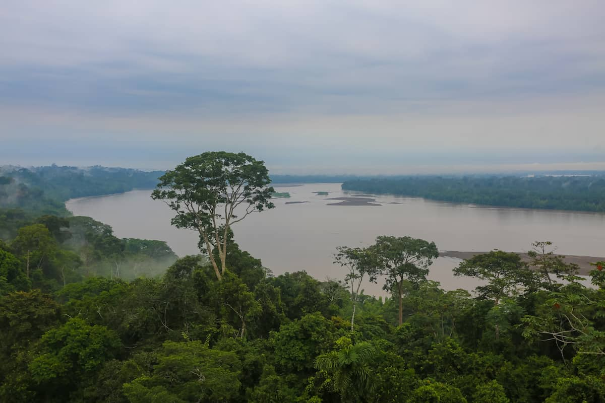 View from the Observation Tower Cury Mullo in Yasuni National Park
