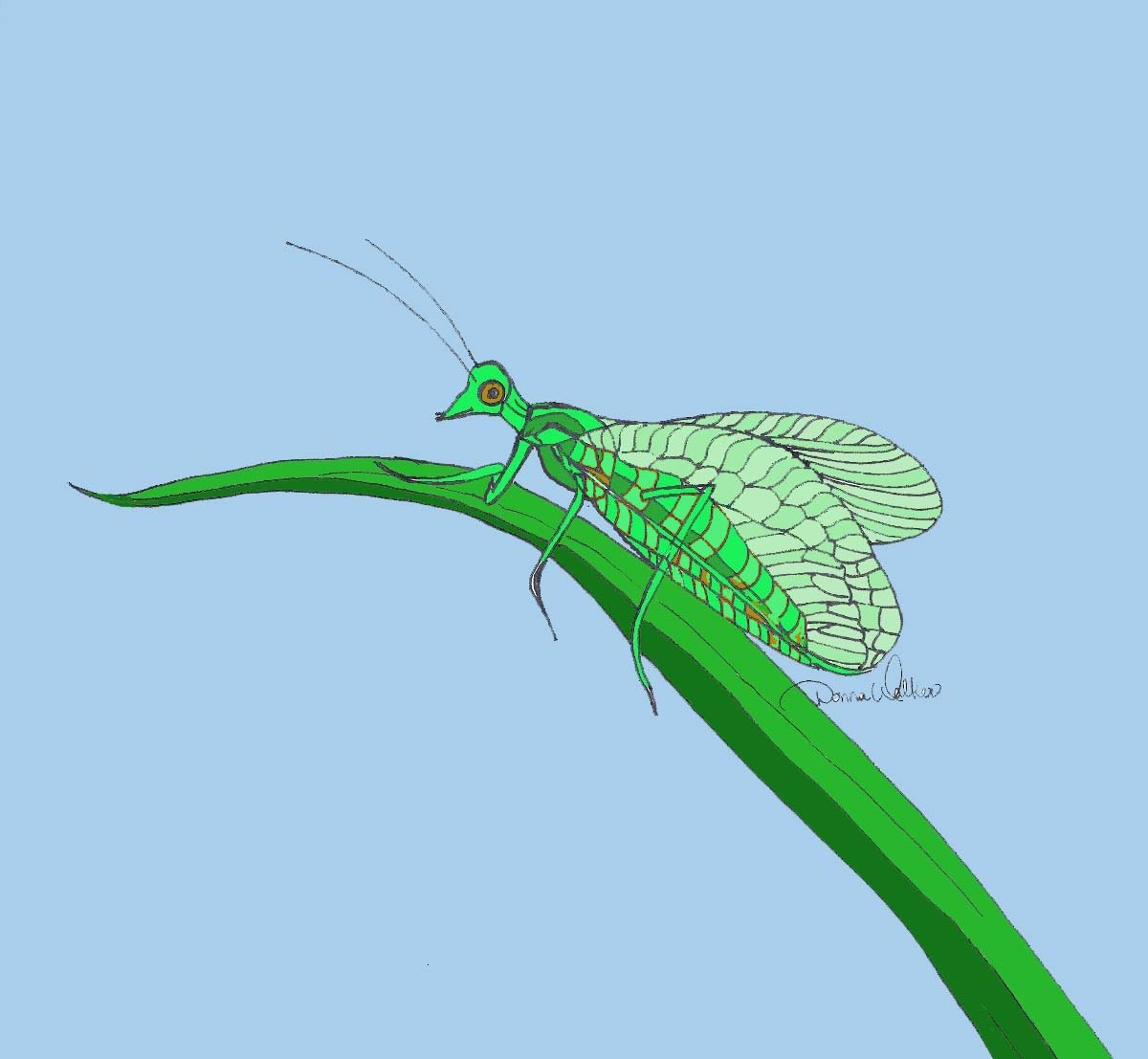 Cartoon of a green lacewing
